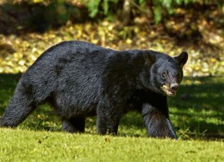 Bear Market Tips