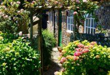 Top Solutions to Make Your Home Green