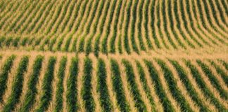 Tips for Becoming a Successful Farmer